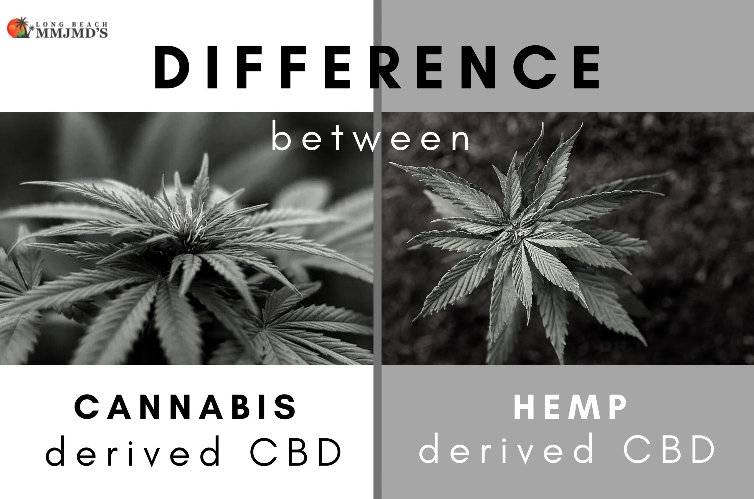 Difference Between Marijuana-Derived vs Hemp-Derived CBD