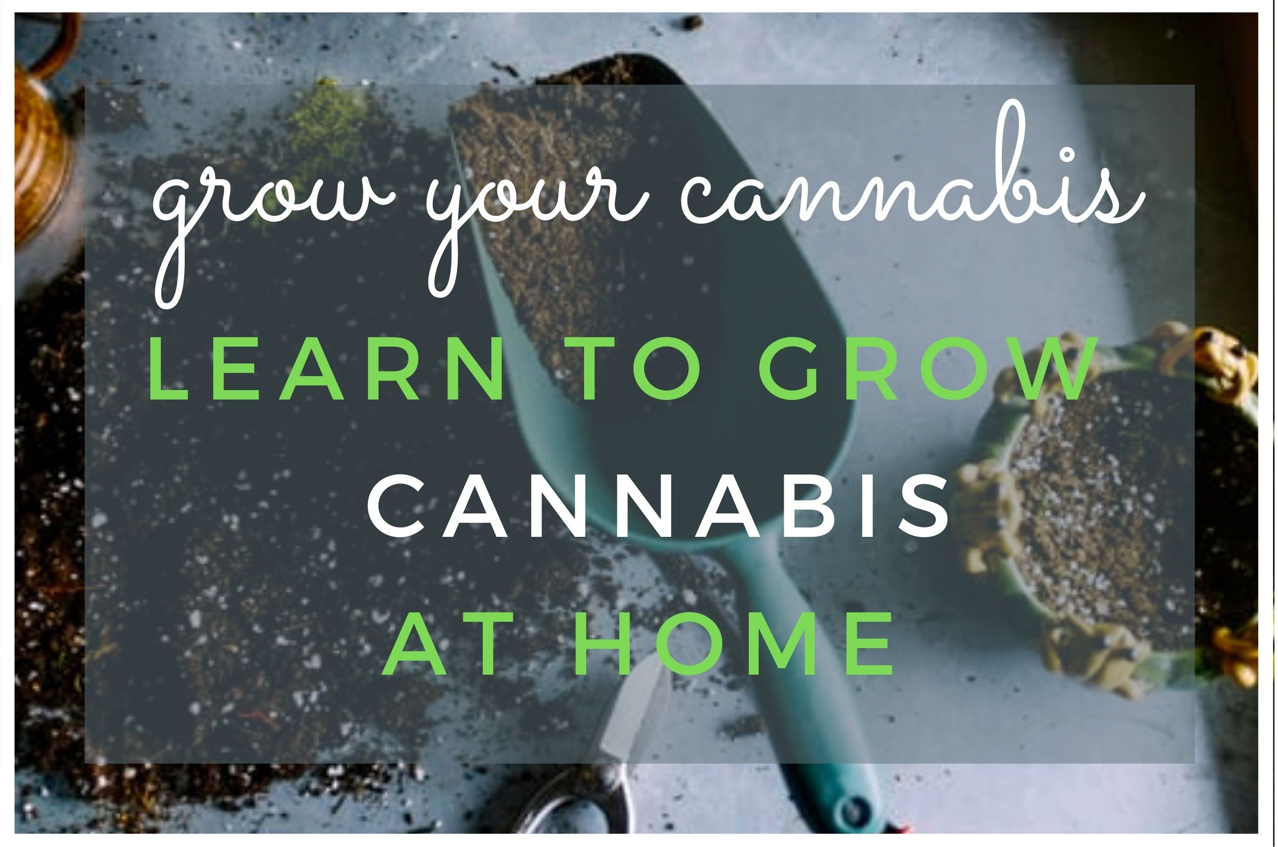 Tips For Beginners Growing Cannabis at Home